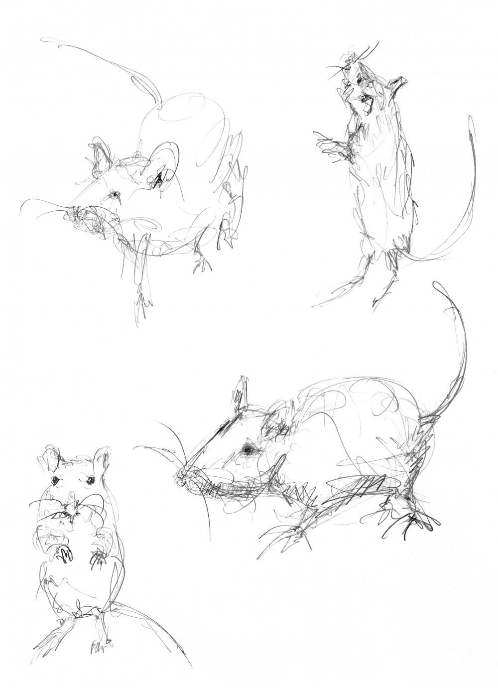 Vier von Julie Béna gezeichnete Mäuse